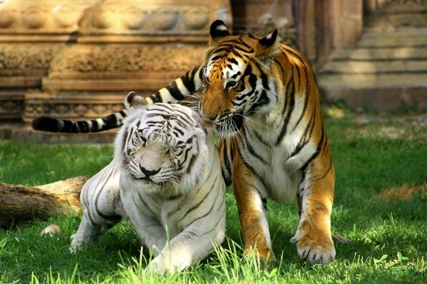 Zoos and Wildlife Parks in Miami